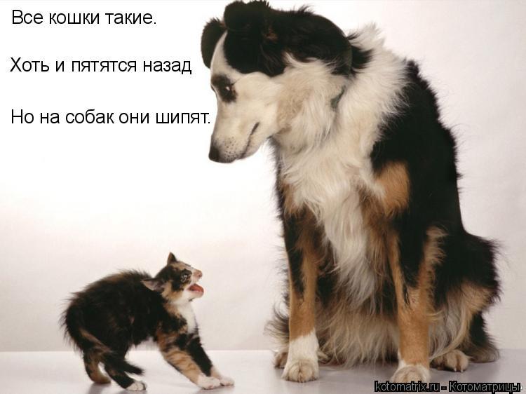 Котоматрица: Все кошки такие. Хоть и пятятся назад Но на собак они шипят.