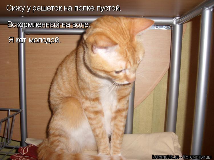 Котоматрица: Сижу у решеток на полке пустой. Вскормленный на воле, Я кот молодой.
