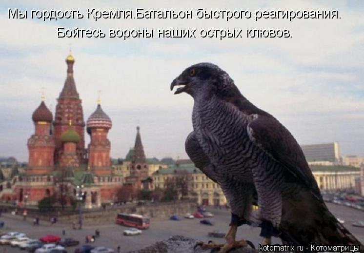 Котоматрица: Мы гордость Кремля.Батальон быстрого реагирования. Бойтесь вороны наших острых клювов.