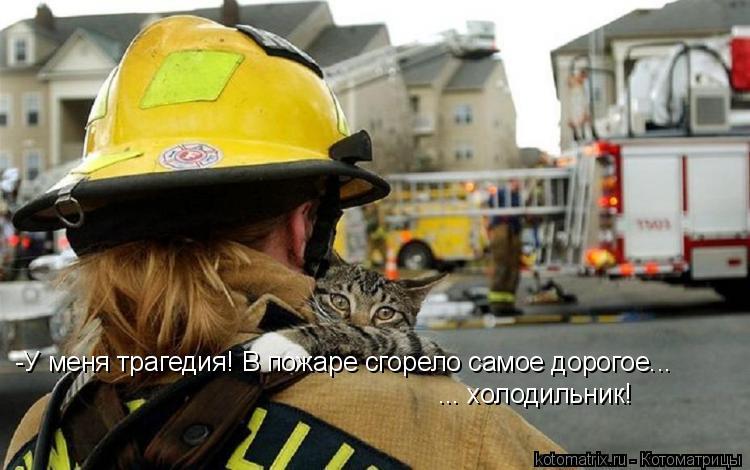 Котоматрица: -У меня трагедия! В пожаре сгорело самое дорогое... ... холодильник!