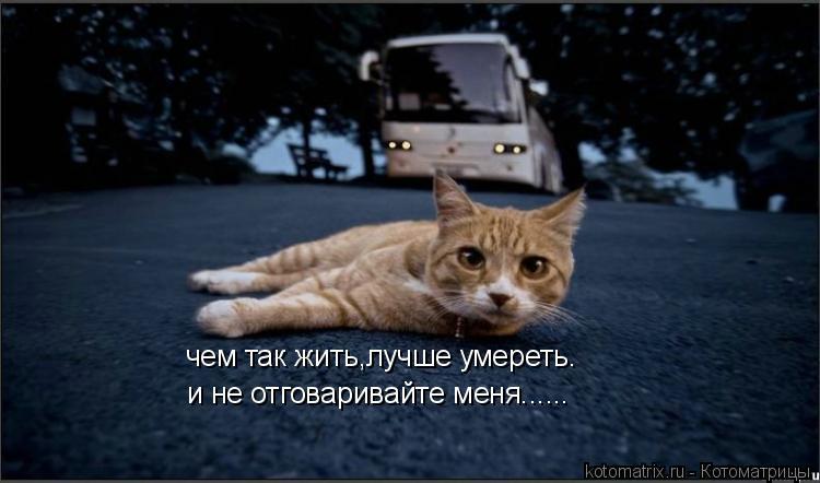 Котоматрица: чем так жить,лучше умереть. и не отговаривайте меня......