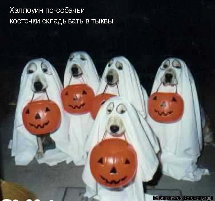 Котоматрица: Хэллоуин по-собачьи косточки складывать в тыквы.