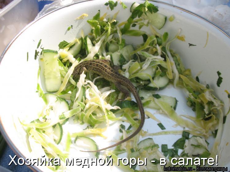 Котоматрица: Хозяйка медной горы - в салате!