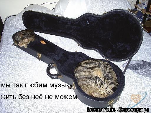 Котоматрица: мы так любим музыку жить без неё не можем.