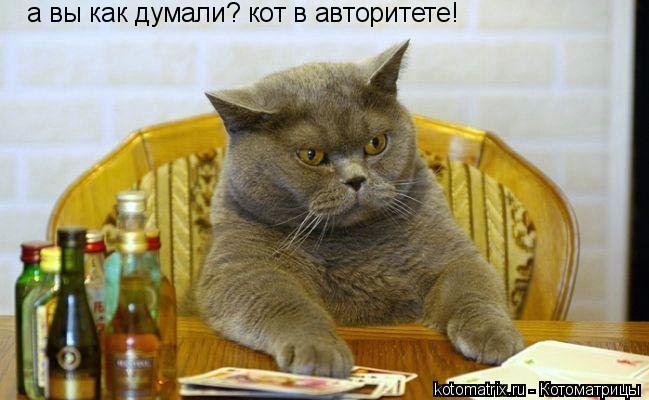 Котоматрица: а вы как думали? кот в авторитете!