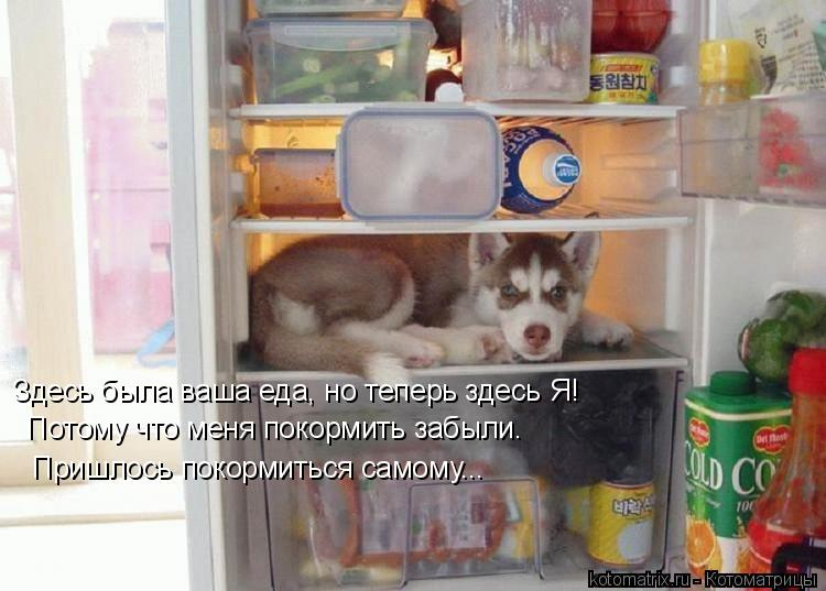 Котоматрица: Здесь была ваша еда, но теперь здесь Я! Потому что меня покормить забыли. Пришлось покормиться самому...