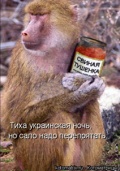 Котоматрица: Тиха украинская ночь, но сало надо перепрятать.