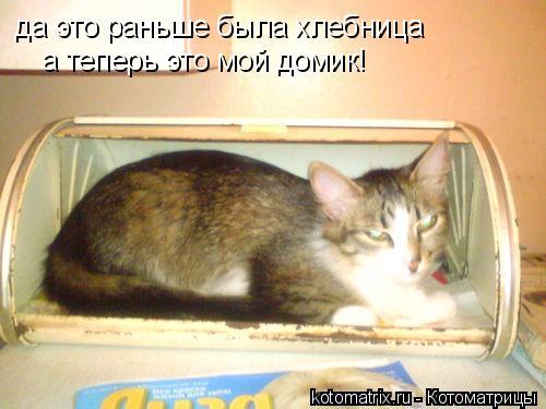 Котоматрица: да это раньше была хлебница а теперь это мой домик!