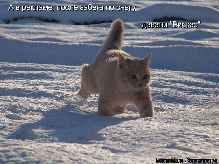 """Котоматрица: А в рекламе, после забега по снегу, давали """"Вискас"""""""