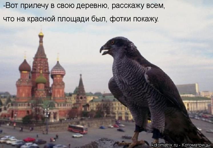 Котоматрица: -Вот прилечу в свою деревню, расскажу всем,  что на красной площади был, фотки покажу.