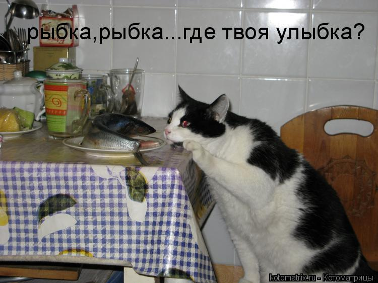 Котоматрица: рыбка,рыбка...где твоя улыбка?