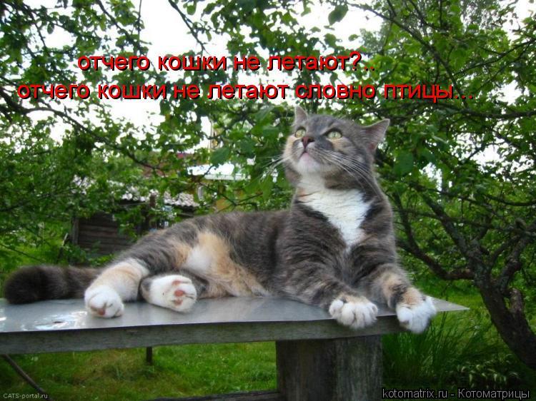 Котоматрица: отчего кошки не летают?.. отчего кошки не летают словно птицы...