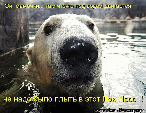 Котоматрица: Ой, мамочки... там что-то под водой двигается не надо было плыть в этот Лох-Несс!!!