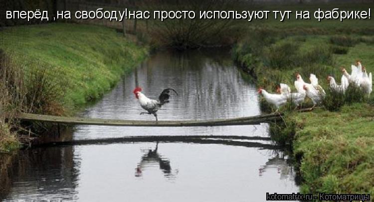Котоматрица: вперёд ,на свободу!нас просто используют тут на фабрике!