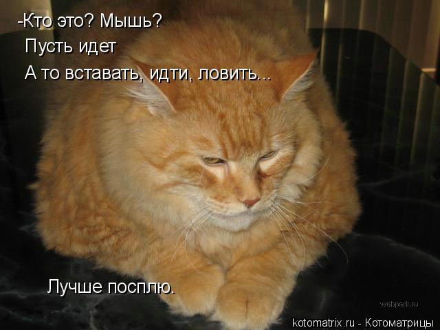 Котоматрица: -Кто это? Мышь? Пусть идет А то вставать, идти, ловить... Лучше посплю.