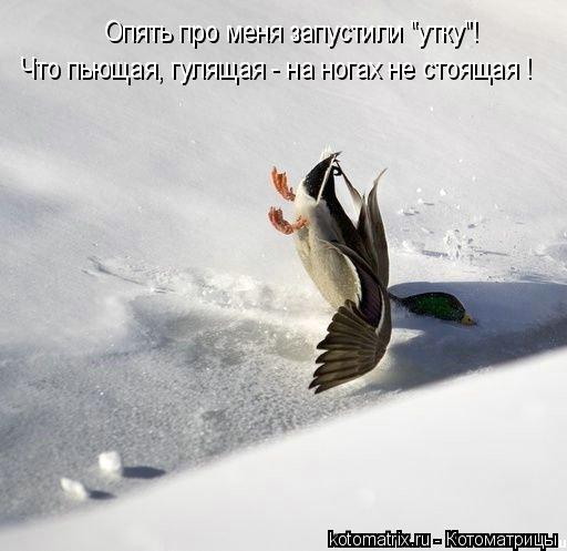 """Котоматрица: Что пьющая, гулящая - на ногах не стоящая ! Опять про меня запустили """"утку""""!"""