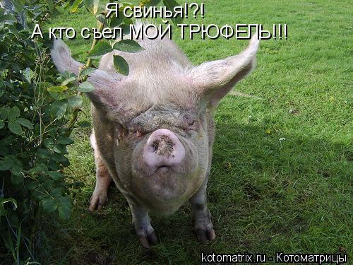 Котоматрица: Я свинья!?!  А кто съел МОЙ ТРЮФЕЛЬ!!!