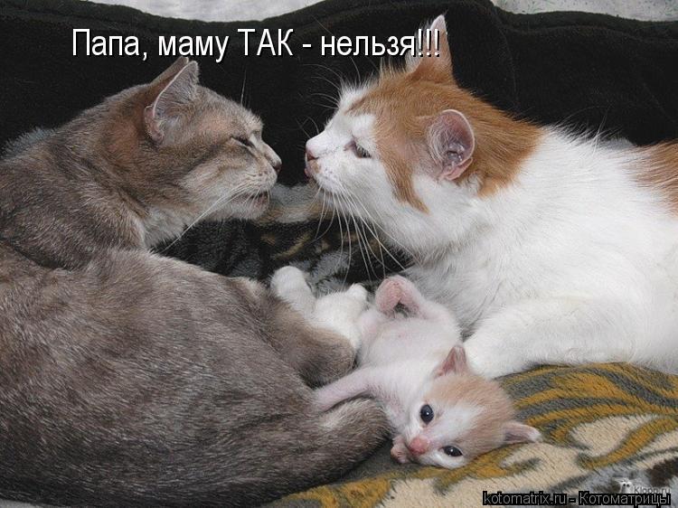 Котоматрица: Папа, маму ТАК - нельзя!!!