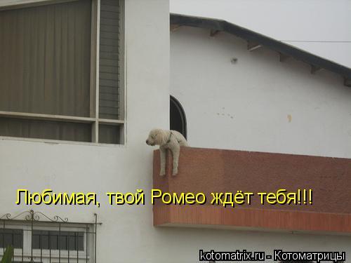 Котоматрица: Любимая, твой Ромео ждёт тебя!!!