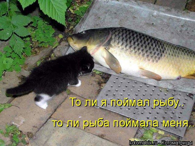 Котоматрица: то ли рыба поймала меня.. То ли я поймал рыбу..