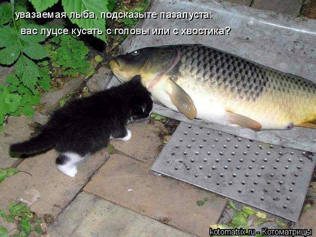 Котоматрица: увазаемая лыба, подсказыте пазалуста: вас луцсе кусать с головы или с хвостика?