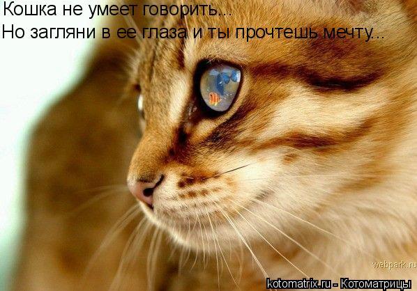 Котоматрица: Кошка не умеет говорить... Но загляни в ее глаза и ты прочтешь мечту...