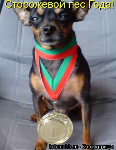 Котоматрица: Сторожевой пес Года!