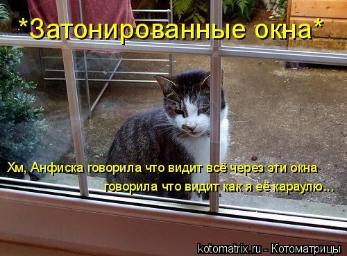 Котоматрица: Хм, Анфиска говорила что видит всё через эти окна говорила что видит как я её караулю... *Затонированные окна*
