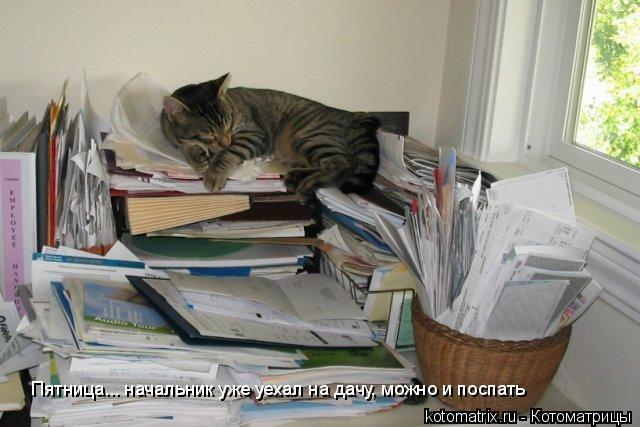 Котоматрица: Пятница... начальник уже уехал на дачу, можно и поспать