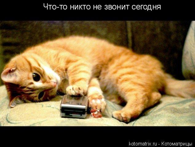 Котоматрица: Что-то никто не звонит сегодня