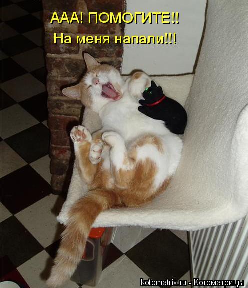 Котоматрица: ААА! ПОМОГИТЕ!! На меня напали!!!