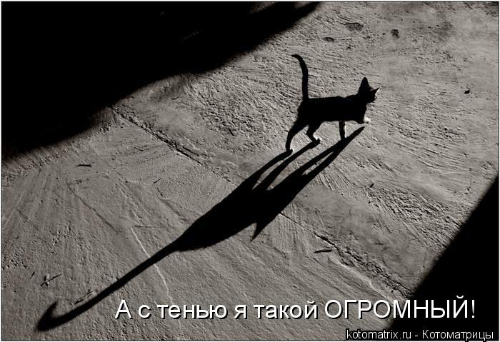 Котоматрица: А с тенью я такой ОГРОМНЫЙ!