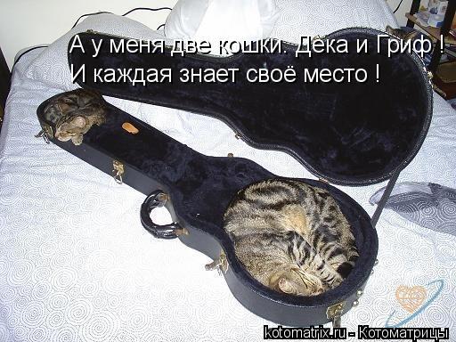 Котоматрица: А у меня две кошки. Дека и Гриф ! И каждая знает своё место !