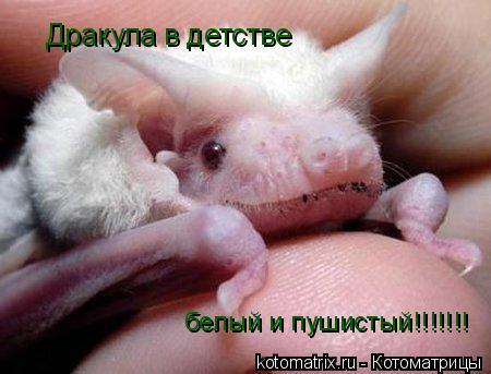 Котоматрица: Дракула в детстве белый и пушистый!!!!!!!