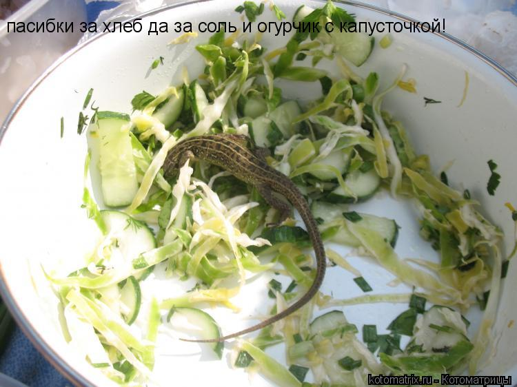 Котоматрица: пасибки за хлеб да за соль и огурчик с капусточкой!