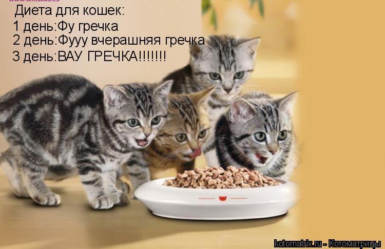 Котоматрица: Диета для кошек: 1 день:Фу гречка 2 день:Фууу вчерашняя гречка 3 день:ВАУ ГРЕЧКА!!!!!!!