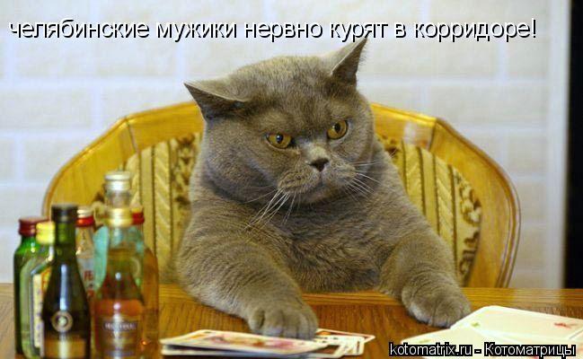Котоматрица: челябинские мужики нервно курят в корридоре!