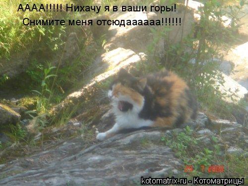 Котоматрица: АААА!!!!! Нихачу я в ваши горы! Снимите меня отсюдаааааа!!!!!!