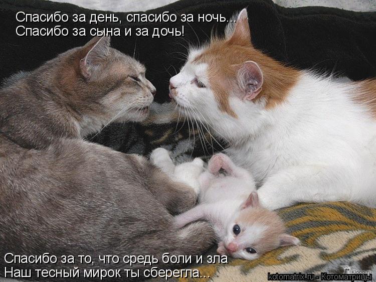Котоматрица: Спасибо за день, спасибо за ночь... Спасибо за сына и за дочь! Спасибо за то, что средь боли и зла Наш тесный мирок ты сберегла...