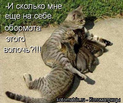 Котоматрица: -И сколько мне обормота этого волочь?!!! еще на себе