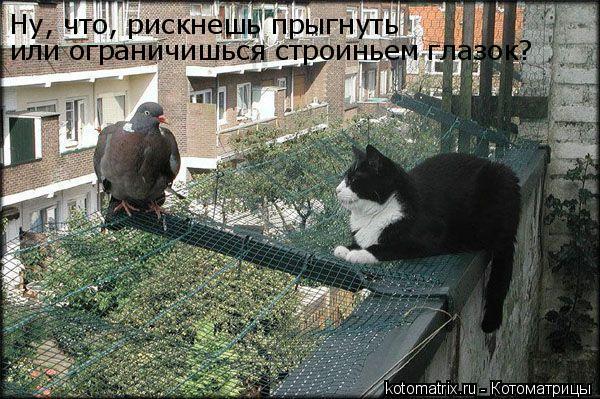 Котоматрица: Ну, что, рискнешь прыгнуть или ограничишься строиньем глазок?