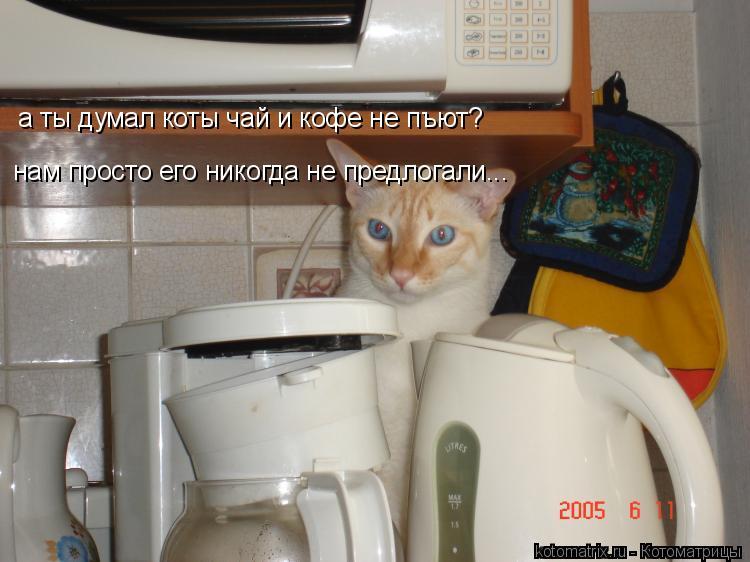 Котоматрица: а ты думал коты чай и кофе не пъют? нам просто его никогда не предлогали...