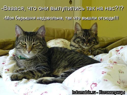 Котоматрица: -Вааася, что они вылупились так на нас?!? -Моя барышня недовольна, так что вышли отсюда!!!