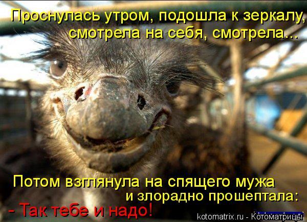 http://kotomatrix.ru/images/lolz/2008/08/04/tS.jpg