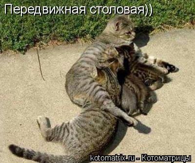 Котоматрица: Передвижная столовая))