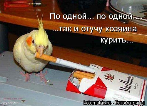 Котоматрица: По одной... по одной.... ...так и отучу хозяина  курить...