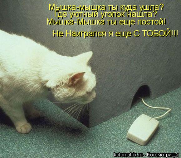Котоматрица: Мышка-мышка ты куда ушла? Где уютный уголок нашла? Мышка-Мышка ты еще постой! Не Наигрался я еще С ТОБОЙ!!!