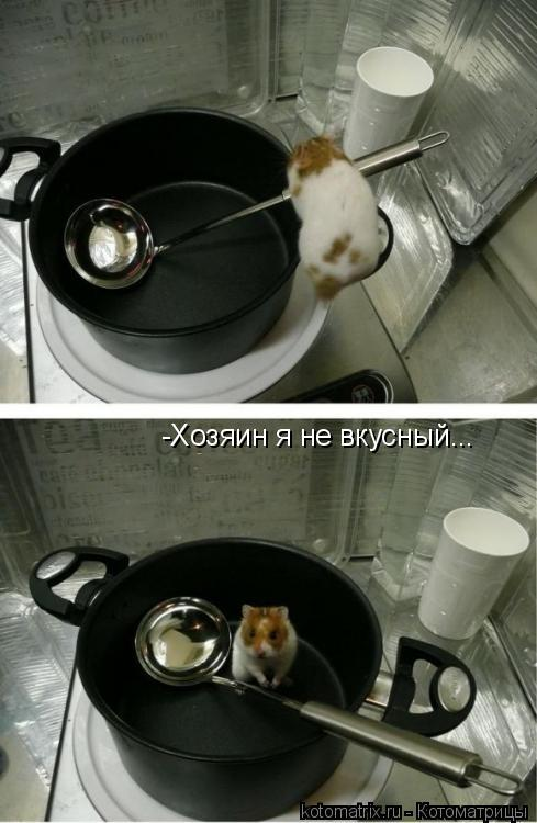 Котоматрица: -Хозяин я не вкусный... -Хозяин я не вкусный...