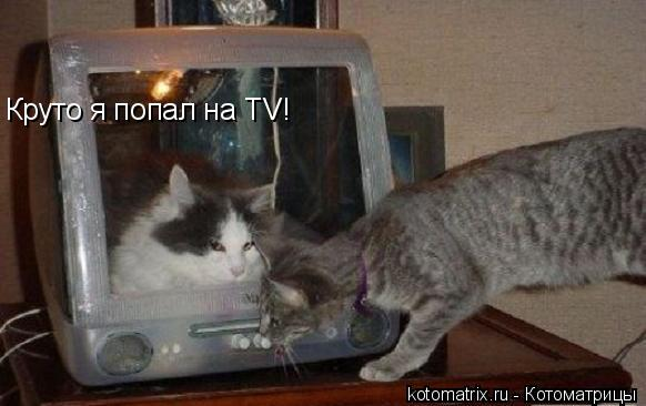 Котоматрица: Круто я попал на ТV!