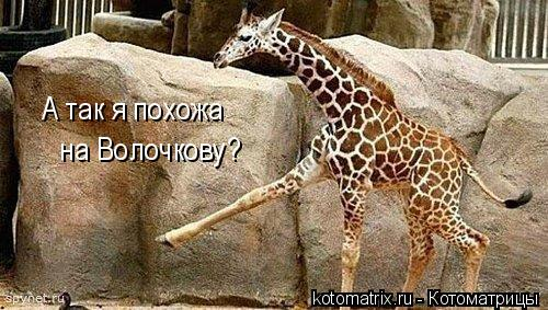 Котоматрица: А так я похожа на Волочкову?